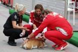 2016年F1第18戦アメリカGP 意外と人気なハミルトンが連れてきている飼い犬