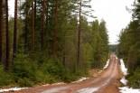 ラリー/WRC | 雪なしスウェディッシュ。オジエ中止を要請も開催へ