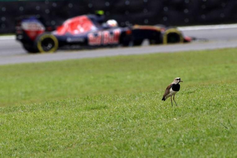 F1 | オコンが最後尾スタート/F1ブラジルGP正式グリッド