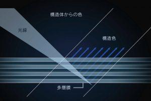 構造発色の原理。モルフォ蝶の羽の構造をもとに積層構造の顔料を開発。青以外の光は吸収し、青の光だけを強く反射させ、青色を発色。