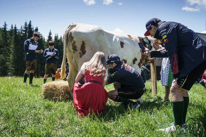 乳牛の乳しぼりをするペレスと、その様子を撮影するフェルスタッペン